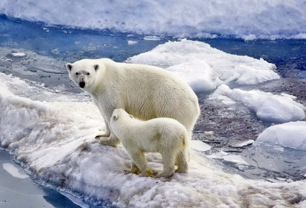 Forward Travel - Norwegian Arctic - Svalbard