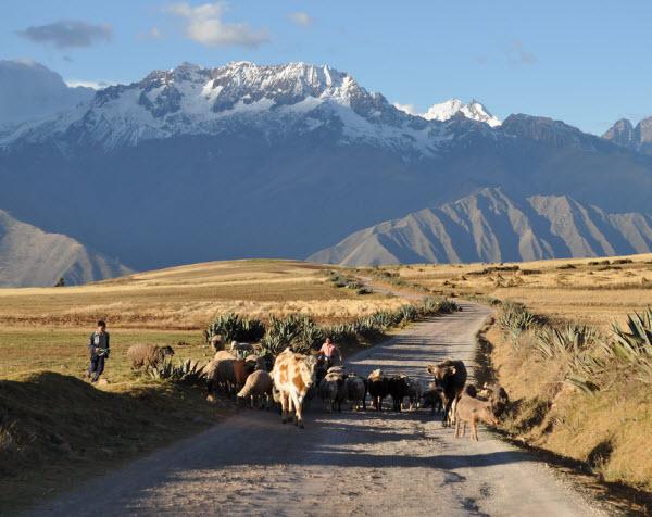 Forward Travel - Sacred Valley Peru