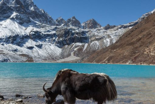 Forward Travel - Visit Gokyo Lakes
