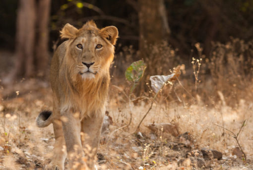 Gir National Park in Gujarat