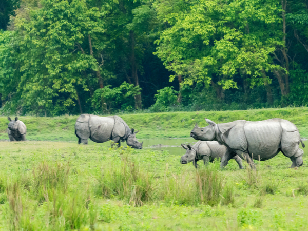 Kaziranga National Forest