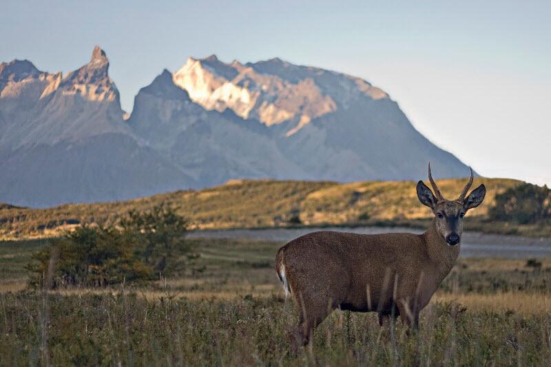 Patagonia - Spring time