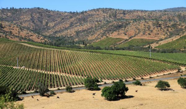 Chilean wine,