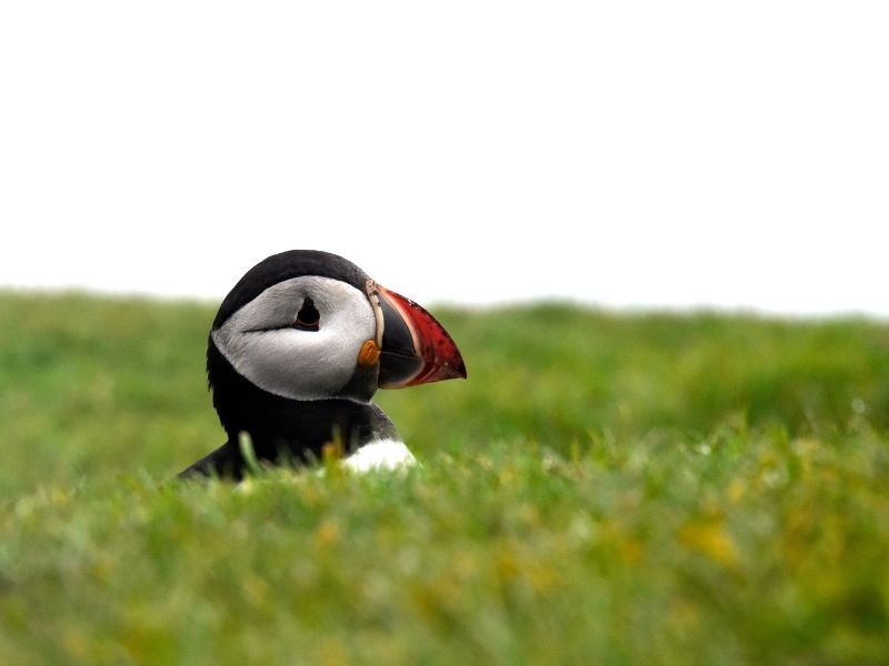 Forward Travel Escorted Tours Puffin