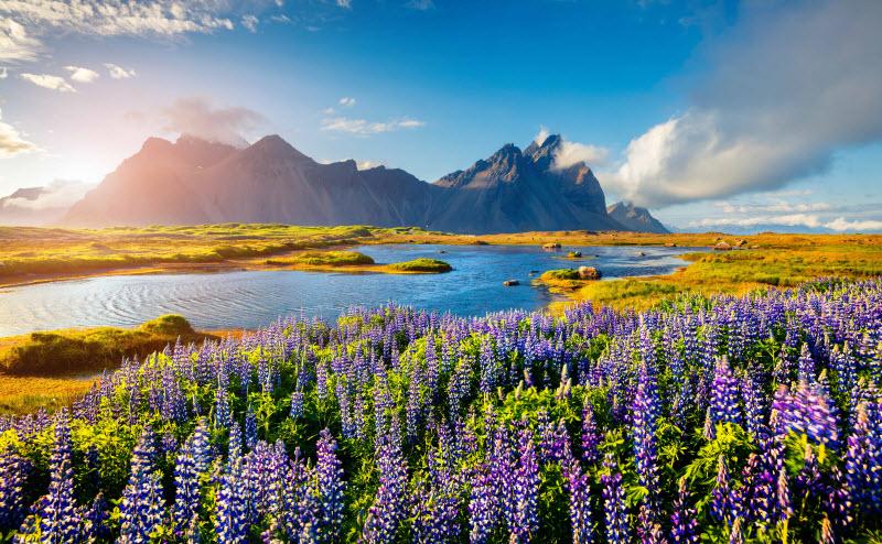 Iceland - Spring
