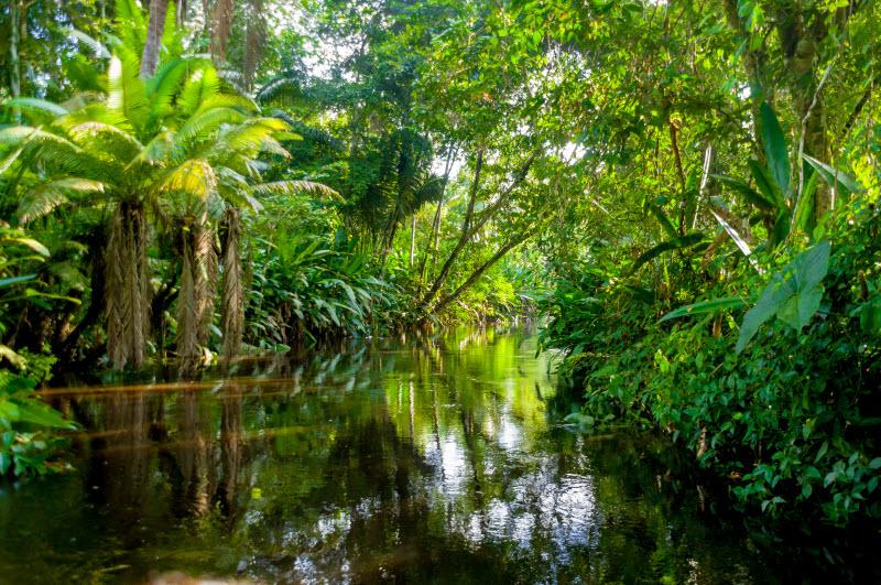 Amazon Region