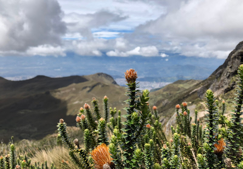 Quito and The Andes Region