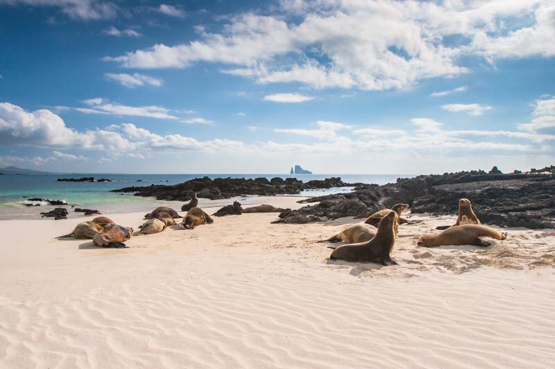 The Galapagos Islands Animals