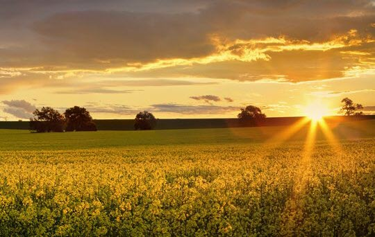 FT - A farmfield with the rising sun